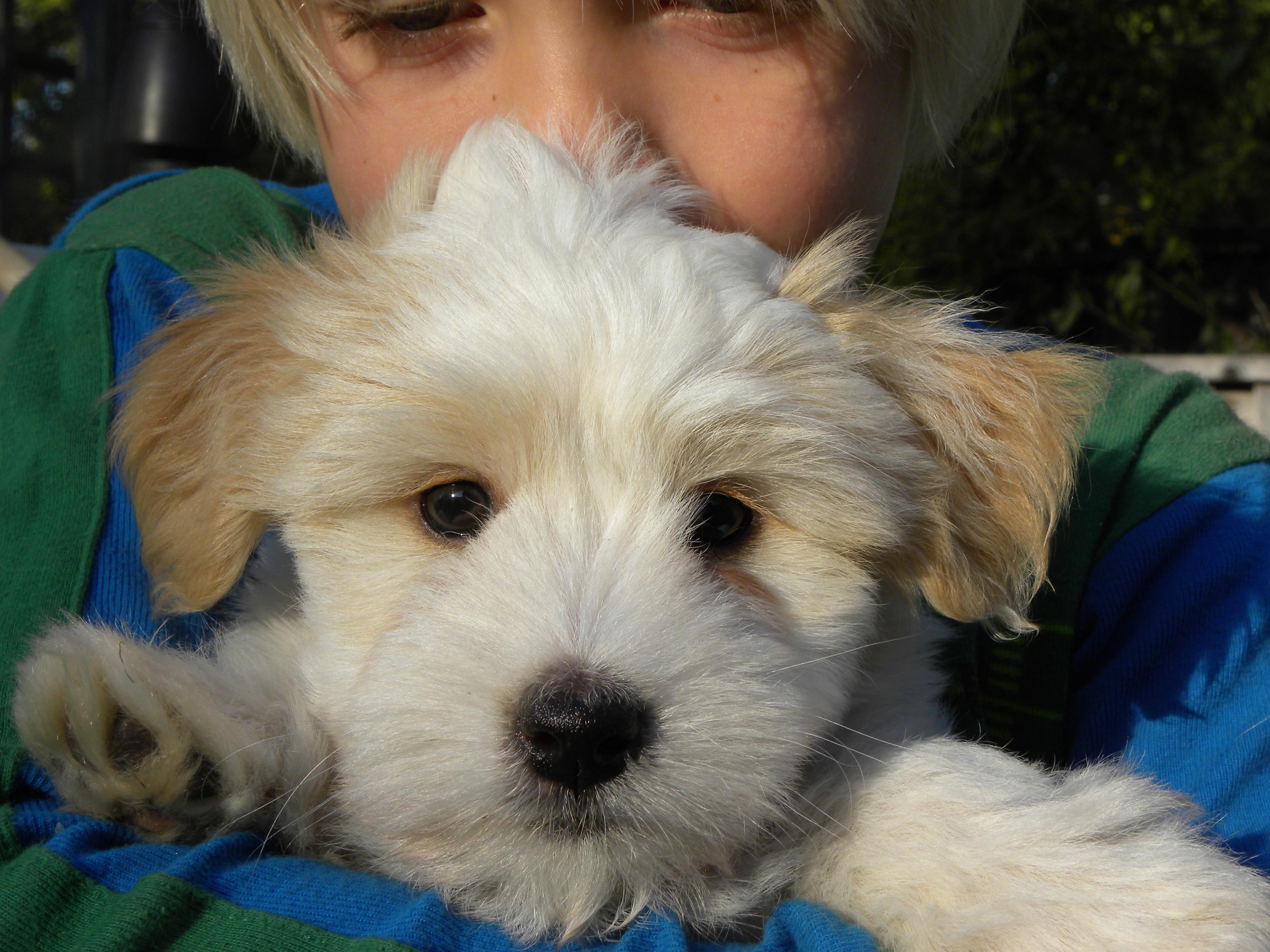 Dougie- first litter